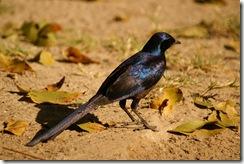 En anden afrikansk fugl.