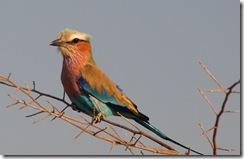 En afrikansk fugl...