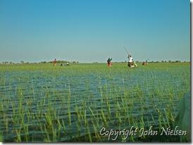 Okavango set nedefra - næsten da