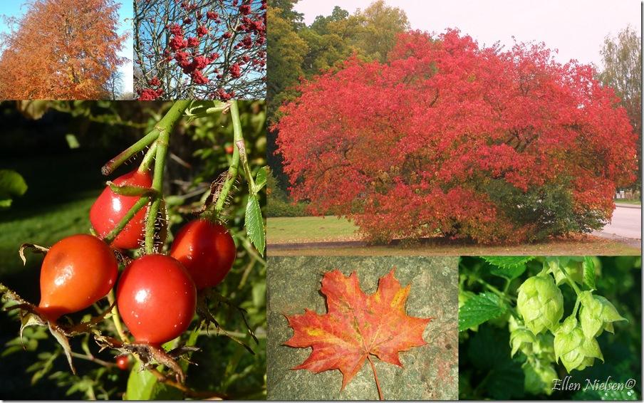 Høst - efterår