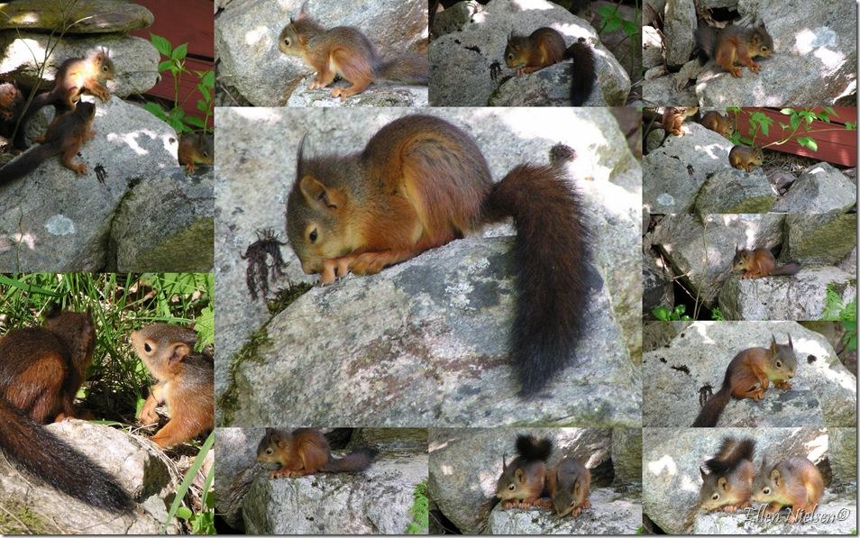 Egernungerne