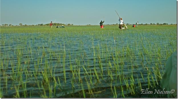 Okavangodeltaet