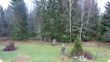 Lille John i den store skov