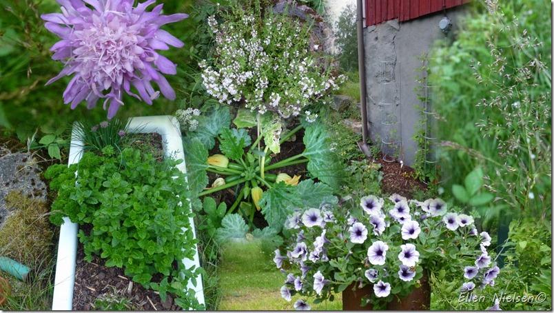 BlomsterJuli2012