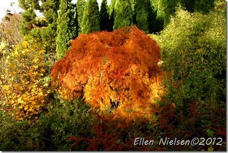 Gisselfeld efterår 2012