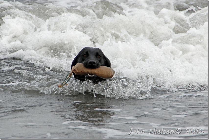 Liva i vandet (6)
