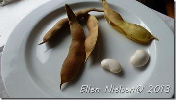store hvide bønner (3)