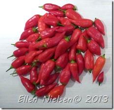 Chili sept 2013 (2)