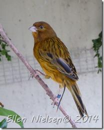 En ... fugl i Hobbyland
