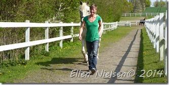 Ved Pernilles hest (2)