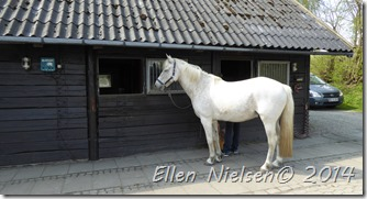 Ved Pernilles hest (3)
