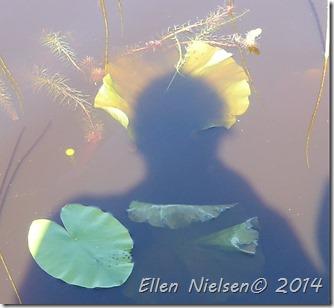 Ellens glorie