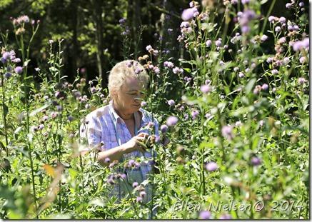 Ellen fotograferer i tidslerne (3)