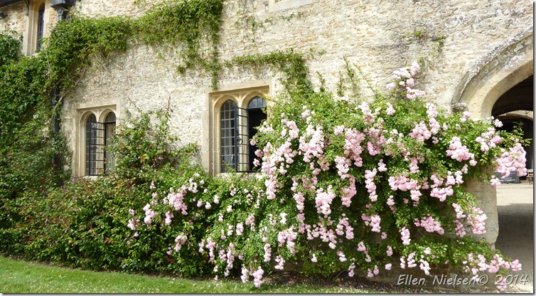 Great Chalfield Manor and Garden (3)
