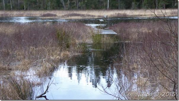 Vand i åen 11 januar (2)