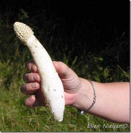 hvordan man holder op med penis ildelugtende