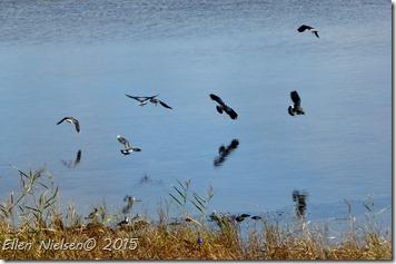 Viberne spejler sig i fjorden