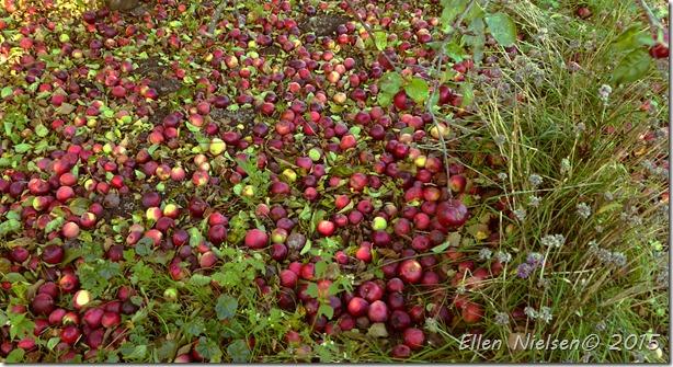 Æbler galore