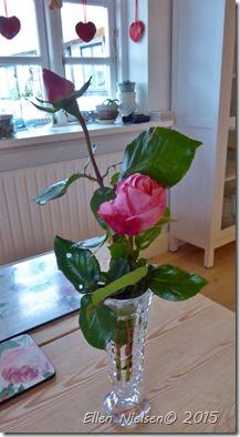 Roser i december (1)