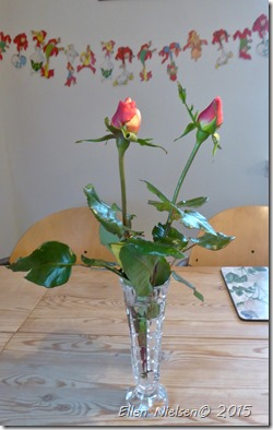 Roser i december
