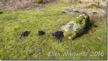 Elhegn vildsvin muldvarp (2)