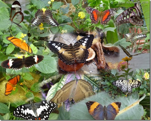 Butterfly World 1