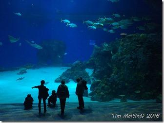 Familien foran det store akvarium i Den Blå Planet