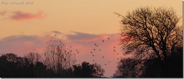 Mågerne vender hjem til aften