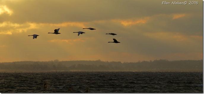 De flyver mod nordøst - vi flyver mod sydvest ...
