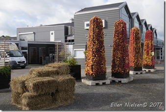 Æblefestival i Kivik (1)