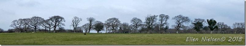 Corfe Castle (34)