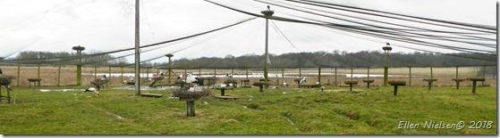 Storke ved Fulltofta