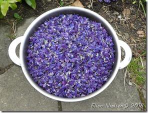1500 gram lupinkronblade