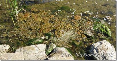 Fjorden kaster op (2)