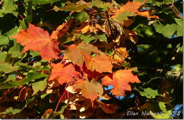 Efteråret er begyndt