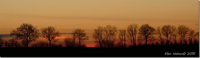 Træer ved Nysø i solnedgangen