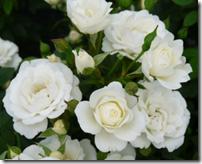 White Cover 40-60 cm