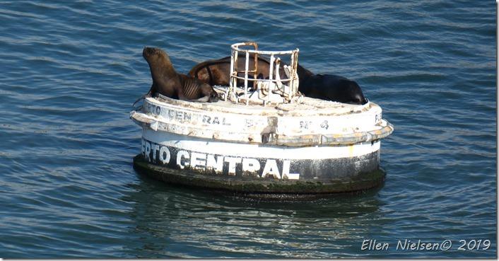 Sæler i San Antonios Havn