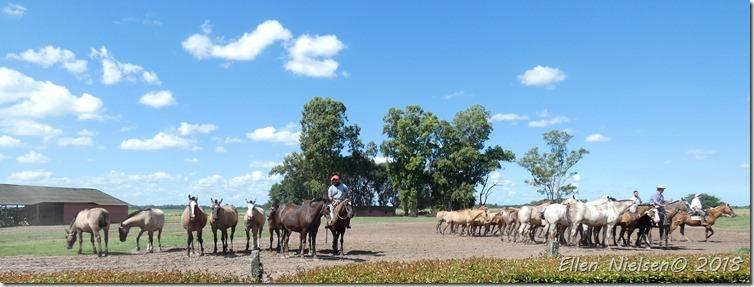 Gauchos, Argentina
