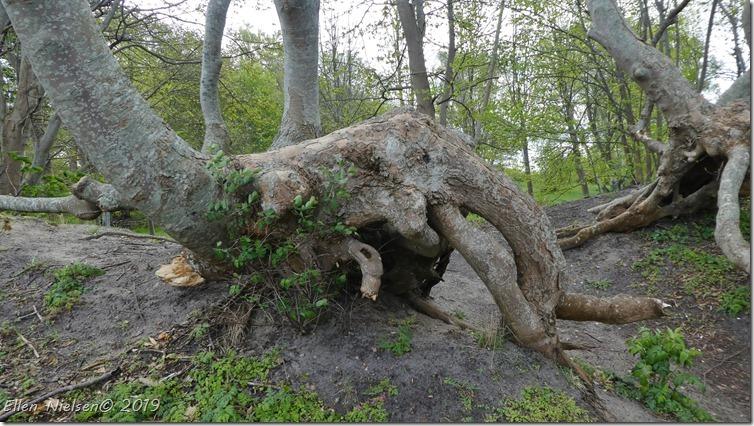 En træ-elefant