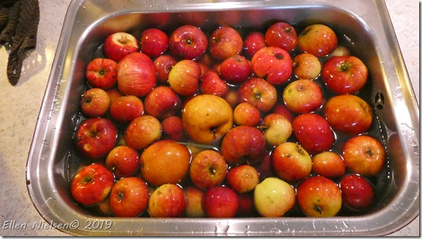 Æblegele in spe