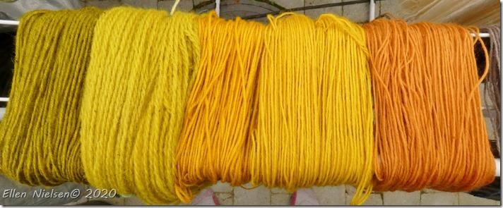 Farve-vau eller farve-reseda (2)